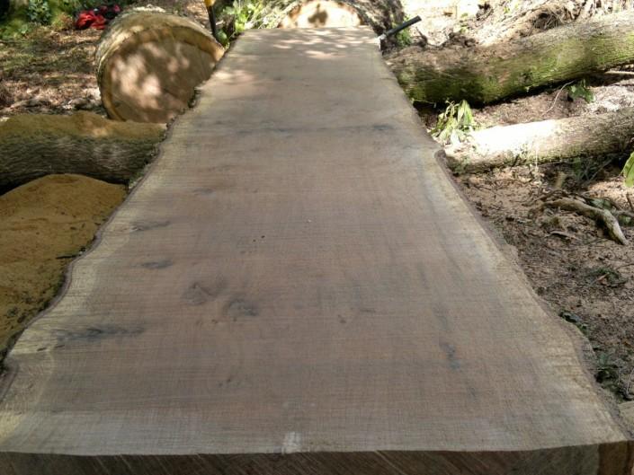 Sessile Oak, good ratio of heartwood to sapwood