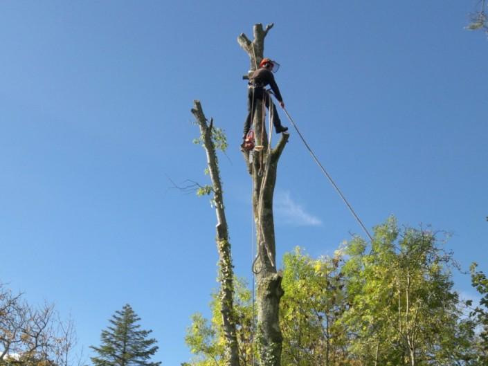 Arboriculture