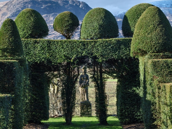 Topiary / hedgecutting